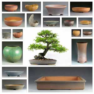 Choosing Trays And Pots
